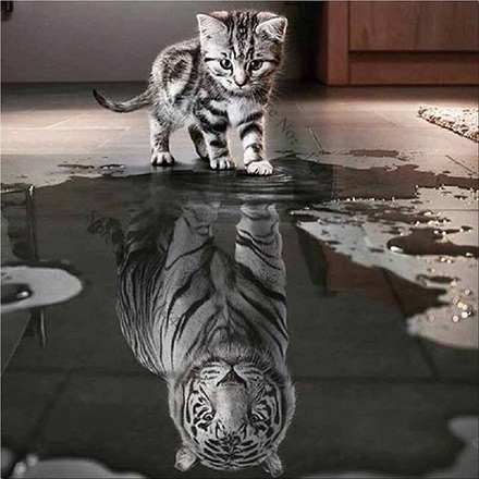 chat_reflet_lion